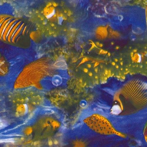 Dynamic Orthopedics Transfer Paper Nemo Fish2